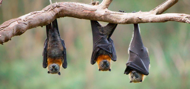 La colaboración biológica