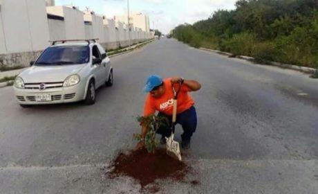 JALÓN DE OREJAS AL AYUNTAMIENTO DE BJ; siembran plantas en baches