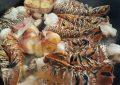 Mal clima podría favorecer en la `corrida´ de la langosta: Pescadores